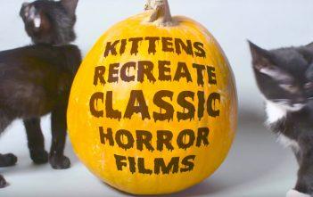 katzen-horrorfilme